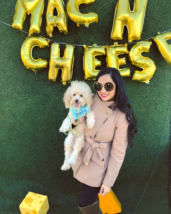 Foodies & Dogs: Dog Friendly Food Festivals